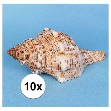 10 stuks versiering schelpen trapezium 14 cm