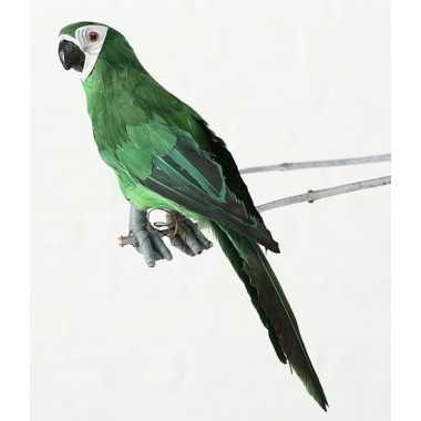 Dierenbeeld groene ara papegaai vogel 33 cm hangversiering