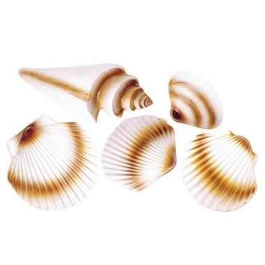 Strand schelpen versiering