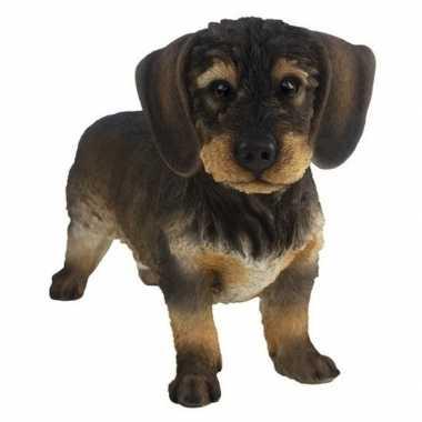 Versiering dieren beeld ruwharige teckel hond donkerbruin 29 cm