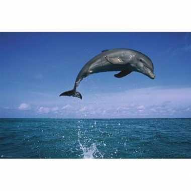 Versiering poster dolfijn koraalrif