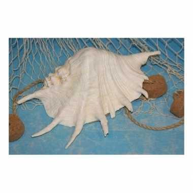 Witte versiering schelp 22 cm