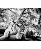 Poster tijger 61 x 91 5 cm wandversiering