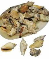 Puntige versiering schelpen in grote schelp