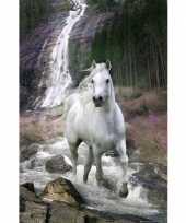 Versiering poster waterval met paard