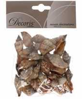 Versiering schelpen zeeslak strombus urseum 3 cm